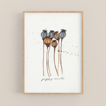 "nathys illustration ""poppy seeds"""