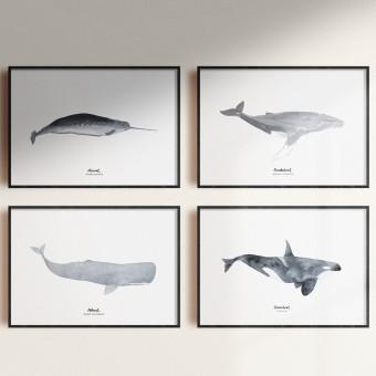 tucán y limón – Wal Print Set Aquarell A4 / Orca / Pottwal / Narwal / Buckelwal