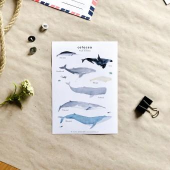 tucán y limón – Wal Sticker aus Recyclingpapier / ohne PVC (5 Stück)